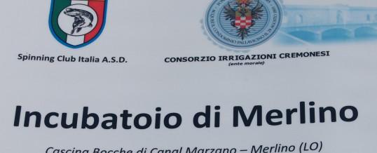 Il futuro della marmorata nell'adda sublacuale: l'incubatoio dello Spinning Club Italia