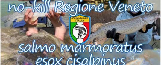 No-Kill Regione Veneto 2019